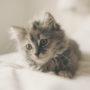 Gatos, los reyes de Internet