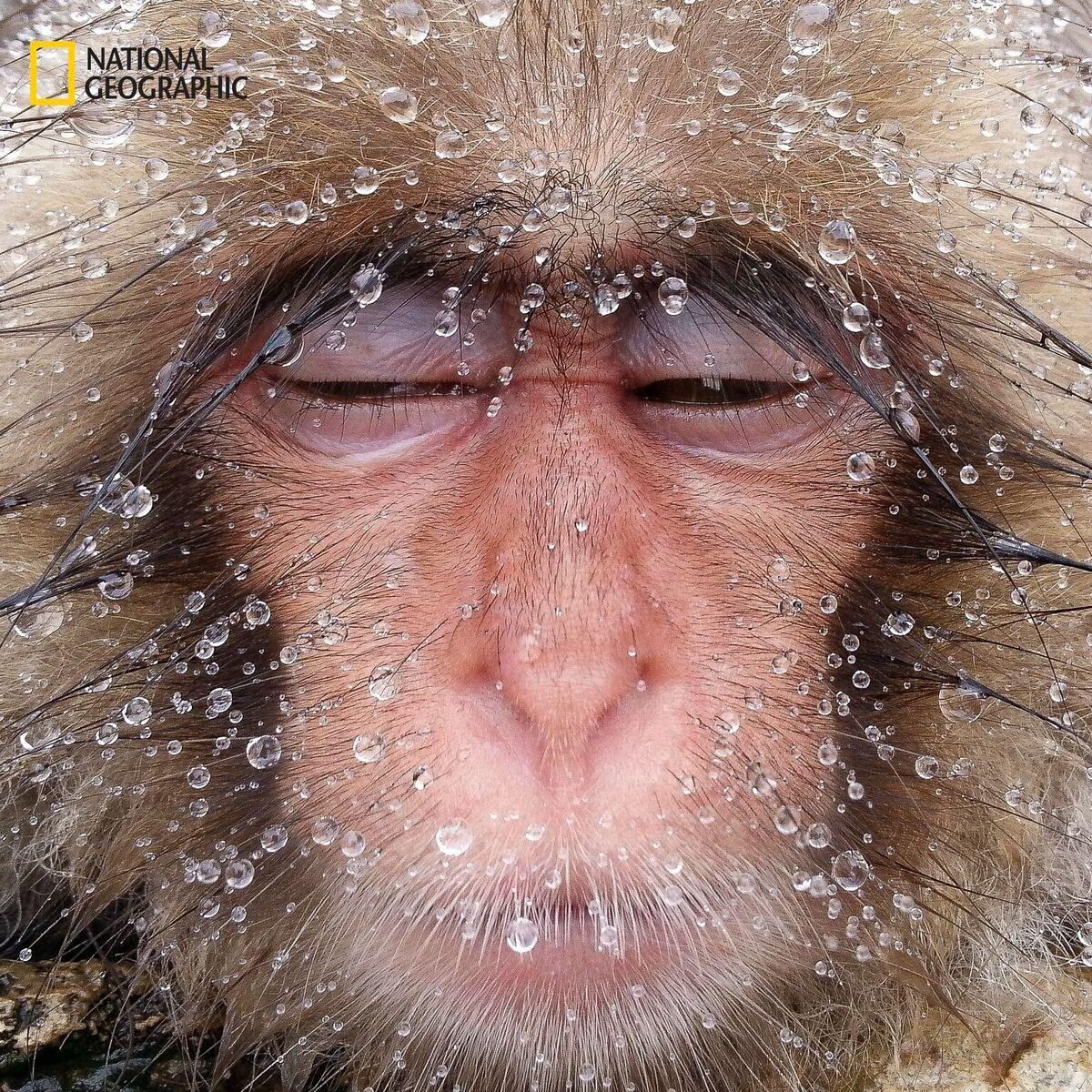 Los animales salvajes según National Geographic