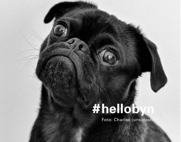 «Animal Lovers», la nueva convocatoria de la Mobile Photo Gallery en FoLa